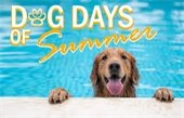 Dog Days and Licensing