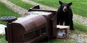 Garbage kills bears