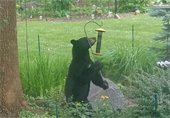Bird Feeders Kill Bears