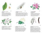Walking Arboretum Page