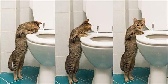 Please Don't Flush Cat Litter