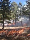 Heil Valley Ranch Prescribed Burn