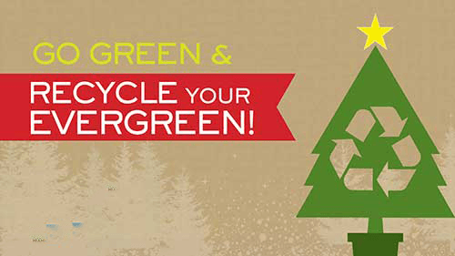 recycle-your-evergreen